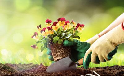 庭と共に暮らそう